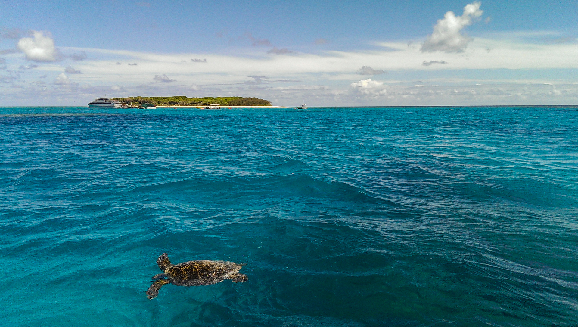 Lady Musgrave Island-3
