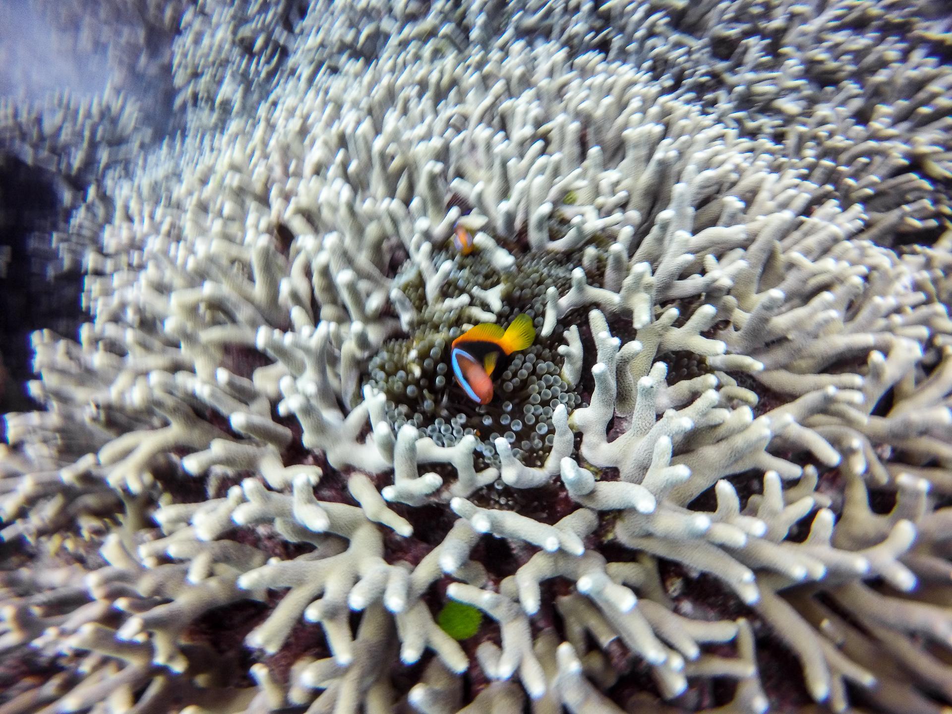 Nemo's cousin.